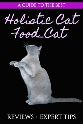 Best Holistic Cat Food - Pet Reviews - Natural Seeket