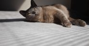 Holistic Cat Food-Sleepy Kitty-Natural Seeker